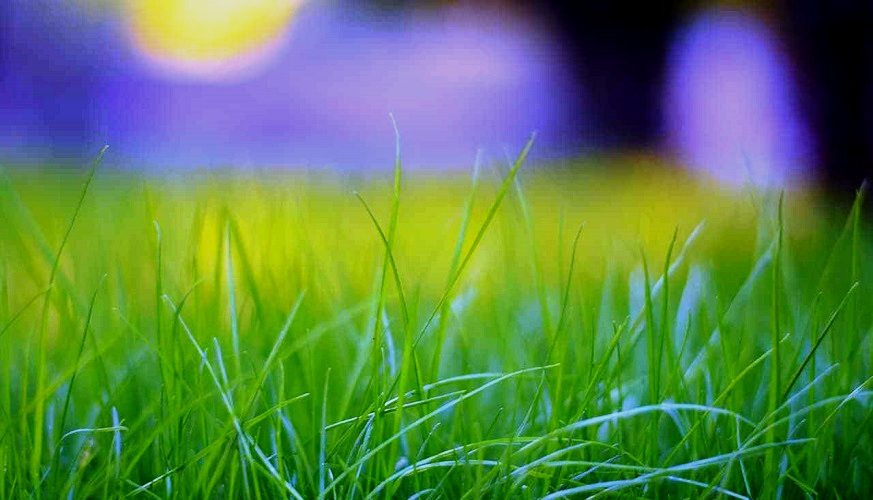 The Grass is Greener on Your Side – Here's How